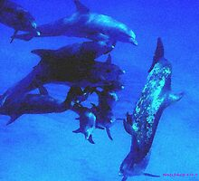 Blue Dolphins by Monte Roberts