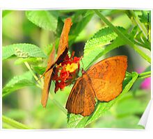 Butterflies in Maharashtra Nature Park Poster
