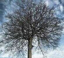 Tree by lynn carter