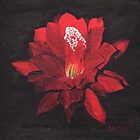 Red Waterlily by BrandyHouse