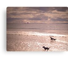 playful dogs Canvas Print