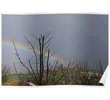 Rainbow =  true colours Poster