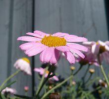 Just a lovely flower by Hekla Hekla