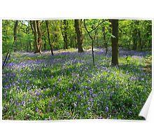 Woodland Bluebells Poster