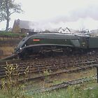 a4 bittern on scaborough spa express  by darren69