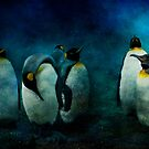 Cold Penguins by ajgosling