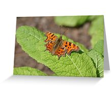 Comma Butterfly on a Primrose Leaf Greeting Card