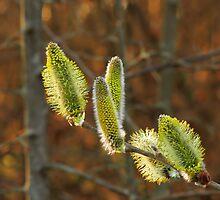 Blooming Willow by Marina Herceg
