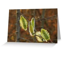 Blooming Willow Greeting Card