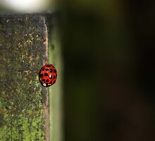 The lonely ladybug... by FonerrM
