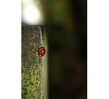 The lonely ladybug... Photographic Print