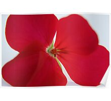 Red Flower Number Three Poster