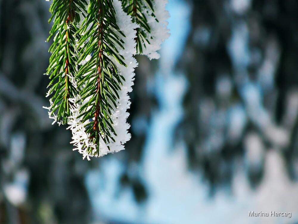 Sunny winter by Marina Herceg