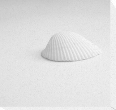 White Shell by ©Maria Medeiros