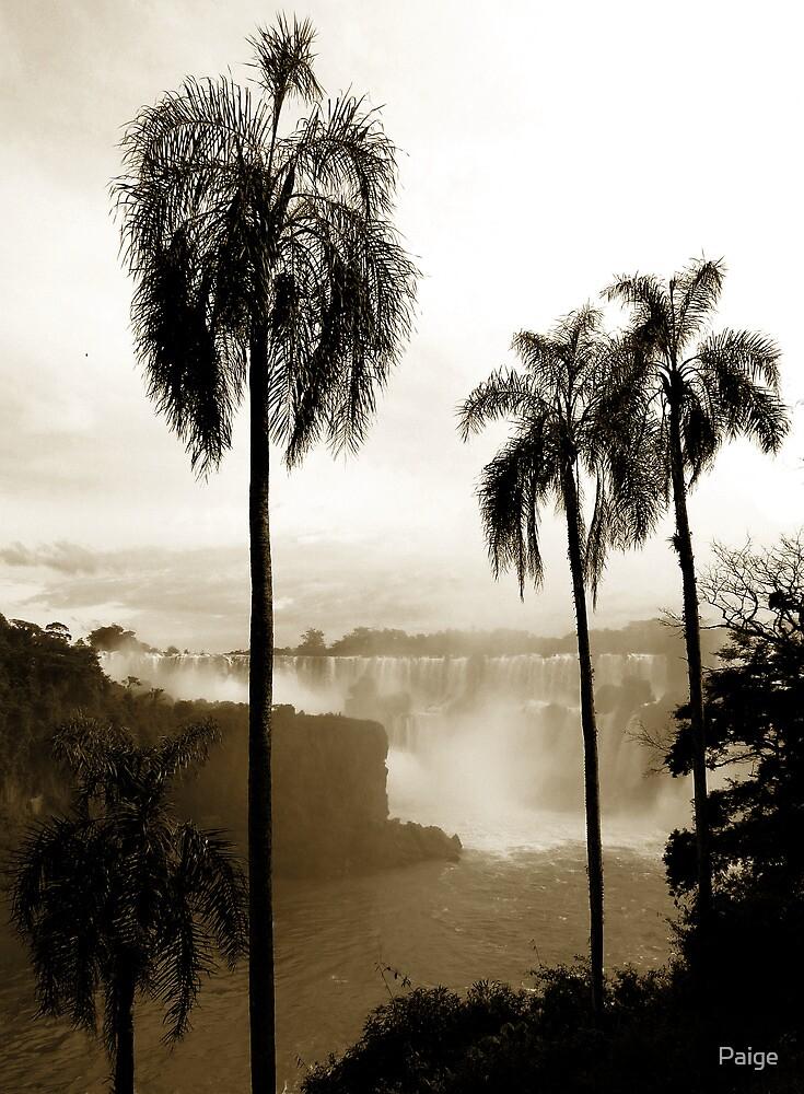 Iguazu palms by Paige