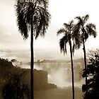 Iguazu palms by Paige