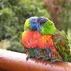 Baby Rainbow Lorikeets by clareville