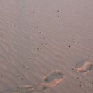 Prints in the sand by waltzink