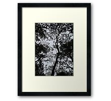 A Walk in the Clouds #4 Framed Print