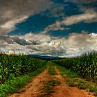Fields Of Summer by Lois  Bryan
