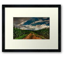 Fields Of Summer Framed Print