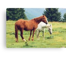 Romanian horses Canvas Print