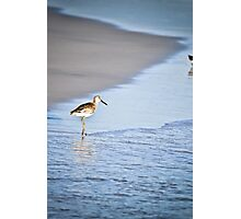 Sandpiper By the Waves Photographic Print