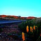 Breath Taking Road Side view- Mt. Isa, Queensland by Amanda  Williamson