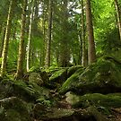 Deep Within the Black Forest by Sue  Cullumber