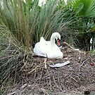 Mother Swan by Laurie Perry