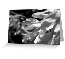 Cascading Petals  Greeting Card