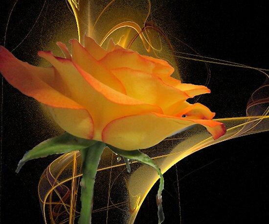 The Apophysis Rose by Mistyarts