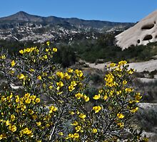 """"""" High Desert Blossoms """" by CanyonWind"""
