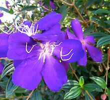 A Spiritual Purple by D. D.AMO