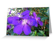 A Spiritual Purple Greeting Card
