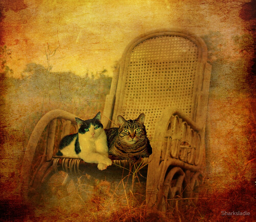 Down Home Cats by Sharksladie