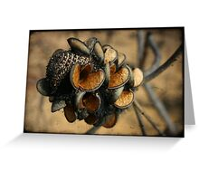 Banksia seed pods Greeting Card