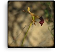 Hammer Orchid Canvas Print