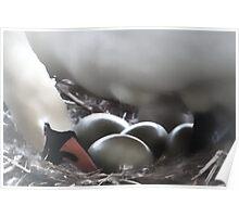 Nest Eggs Poster