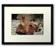 Squirrel mom and three babies Framed Print