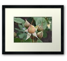 Beautiful Buds Framed Print