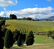 Vines in the Valley by Christina Backus