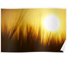 Barley Sunshine Poster