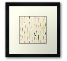 Grasses - Colour Framed Print