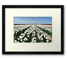 Tulips, as far as you can see..... Framed Print
