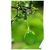 Greenish Easter Poster