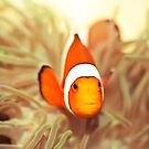 Clownfish by MotHaiBaPhoto Dmitry & Olga