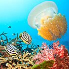 Butterflyfishes and jellyfish by MotHaiBaPhoto Dmitry & Olga