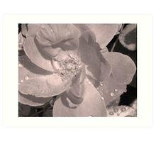 Manipulated Rose Art Print