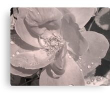 Manipulated Rose Metal Print